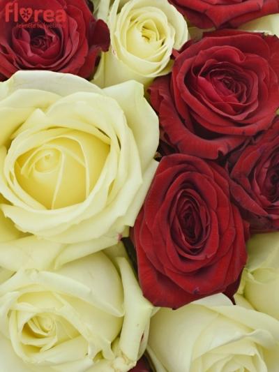 Kytice 21 míchaných růží THINA