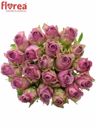 Kytice 21 modrofialových růží COOL WATER 50cm