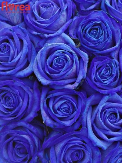 Kytice 21 modrých růží BLUE VENDELA