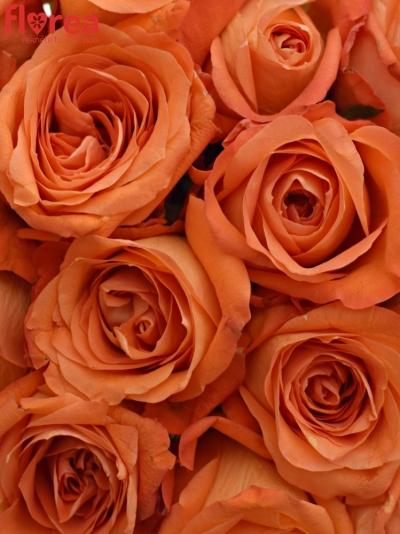 Kytice 21 oranžových růží COPACABANA 50cm