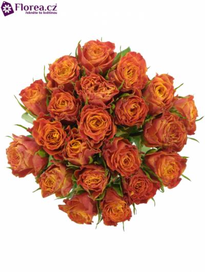 Kytice 21 oranžových růží ESPRESSO 40cm
