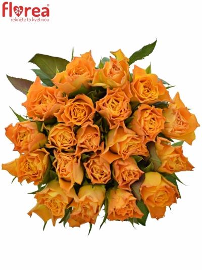 Kytice 21 oranžových růží MARIE-CLAIRE! 60cm