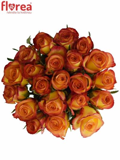 Kytice 21 oranžových růží OUTLAW! 50cm