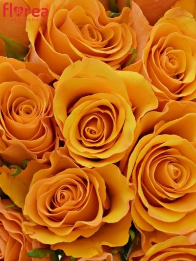 Kytice 21 oranžových růží TYCOON