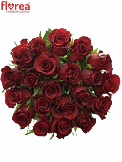 Kytice 21 rudých růží BURGUNDY 50cm