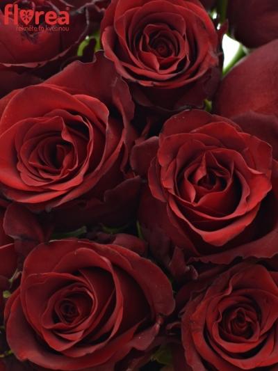 Kytice 21 rudých růží EXPLORER 60cm
