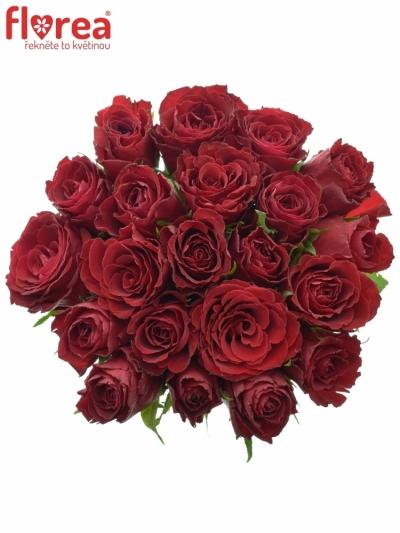 Kytice 21 rudých růží MADAM RED 50cm