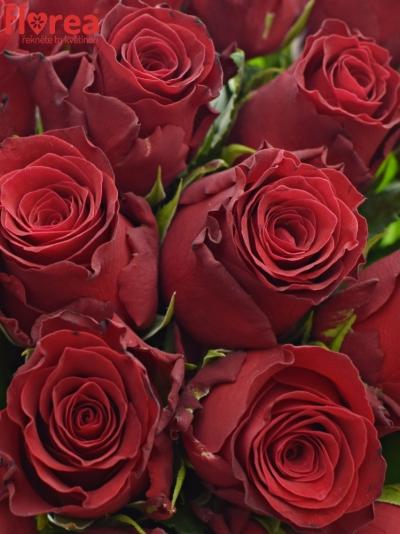Kytice 21 rudých růží RHODOS 60cm