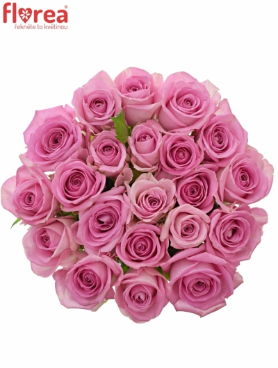 Kytice 21 růžových růží AQUA 40cm