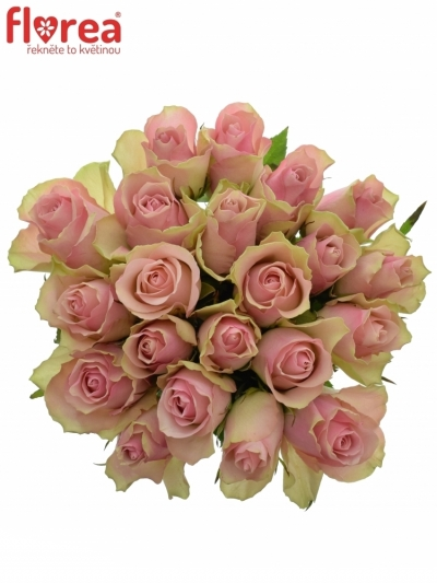 Kytice 21 růžových růží BELLE ROSE 60cm