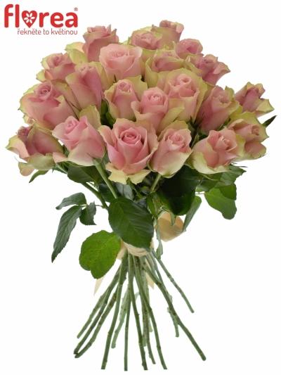 Kytice 21 růžových růží BELLE ROSE 50cm