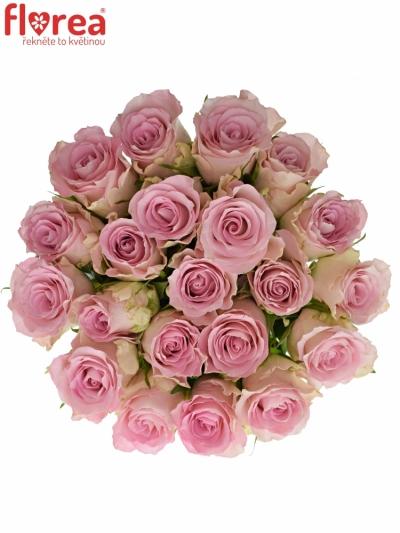 Kytice 21 růžových růží BISOU 50cm