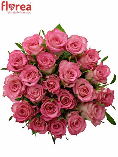 Kytice 21 růžových růží ENSEMBLE 40cm