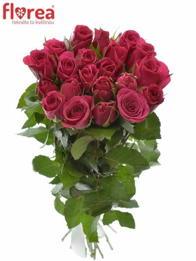 Kytice 21 růžových růží FUCHSIANA 60cm