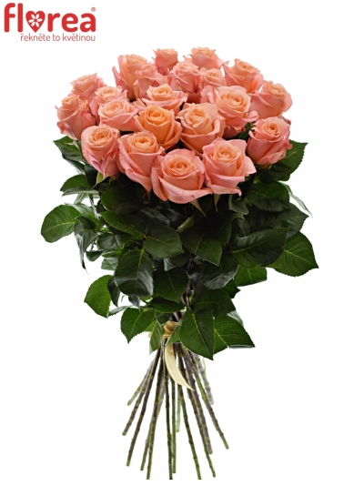 Kytice 21 růžových růží LADY MARGERAT 60cm
