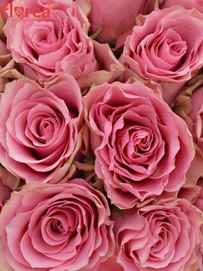 Kytice 21 růžových růží LOVELY RHODOS