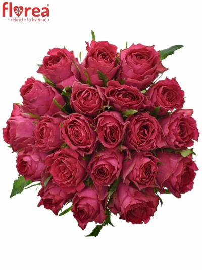 Kytice 21 růžových růží MADAM CERISE