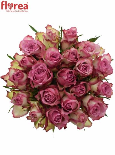 Kytice 21 růžových růží MELINA 50cm