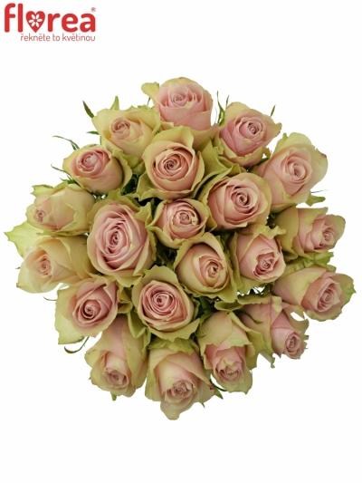 Kytice 21 růžových růží PINK ATHENA 50cm