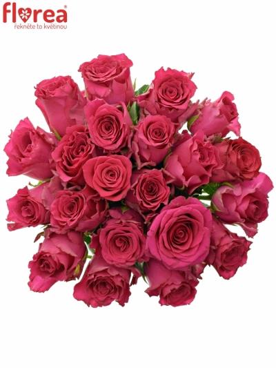 Kytice 21 růžových růží Pink Rhodos 40cm