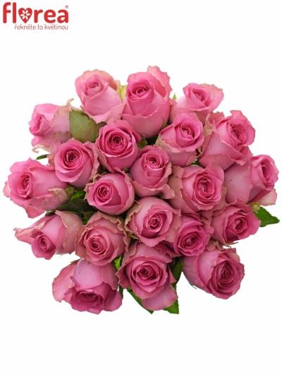 Kytice 21 růžových růží SHANGHAI LADY 40cm