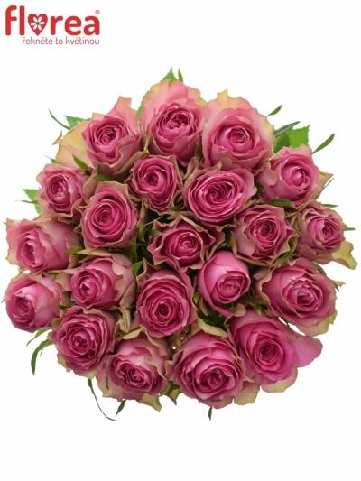 Kytice 21 růžových růží SHIARY 50cm