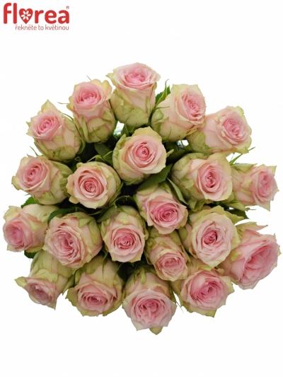 Kytice 21 růžových růží SUDOKU 50 cm