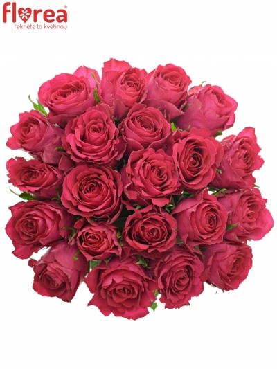 Kytice 21 vínových růží MADAM CERICE 40cm