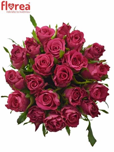 Kytice 21 vínových růží ORCHESTRA 40cm