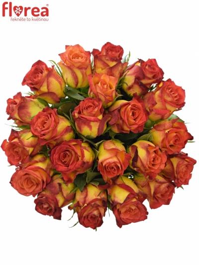 Kytice 21 žíhaných růží CATCH