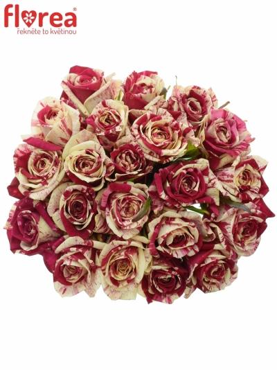 Kytice 21 žíhaných růží HARLEQUIN 50cm