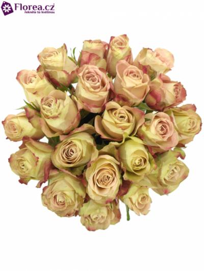 Kytice 21 žíhaných růží UPPER SECRET 40cm