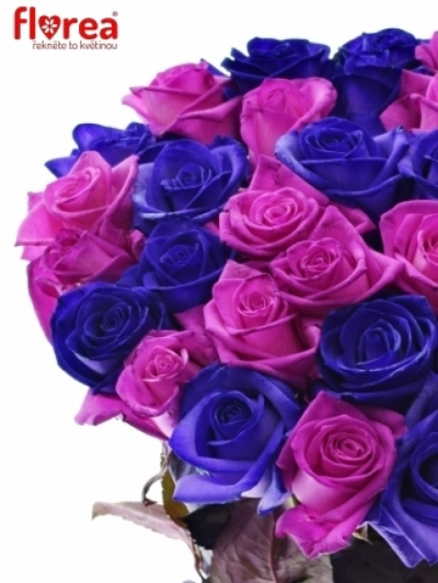 Kytice 25 barvených růží ABDERA