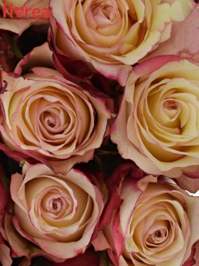 Kytice 25 bílorůžových růží ADVANCE SWEETNESS 40cm