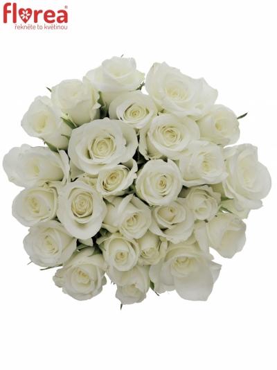 Kytice 25 bílých růží AKITO