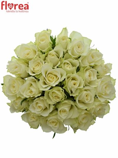 Kytice 25 bílých růží ATHENA 30cm