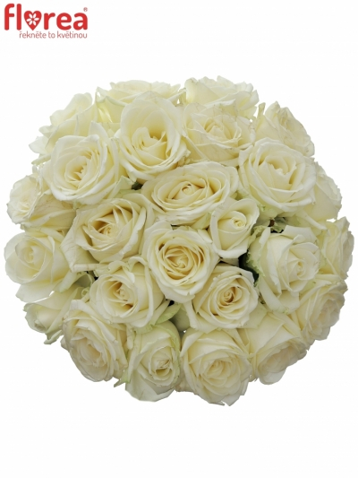 Kytice 25 bílých růží AVALANCHE+ 50cm