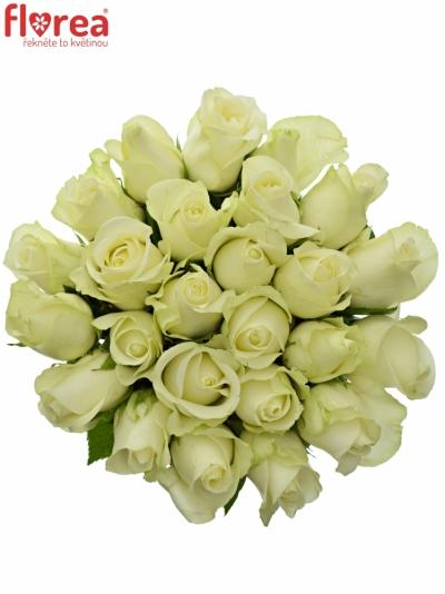 Kytice 25 bílých růží SNOWSTORM 50cm