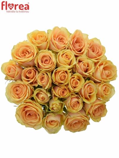 Kytice 25 čajových růží ALCHEMY