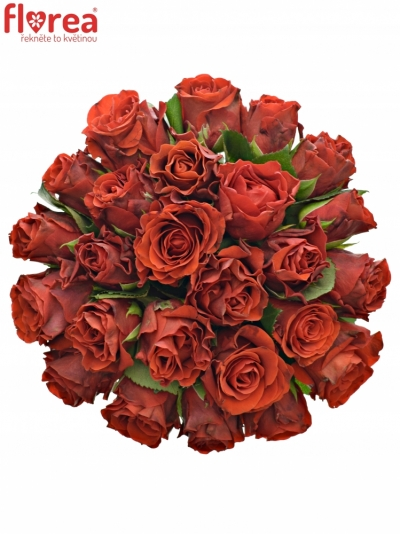 Kytice 25 červených růží EL TORO 40cm