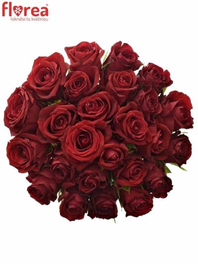 Kytice 25 červených růží FURIOSA 70cm