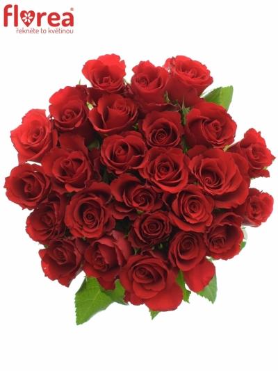 Kytice 25 červených růží RED CALYPSO 40cm