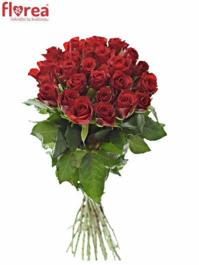 Kytice 25 červených růží RED CALYPSO 60cm