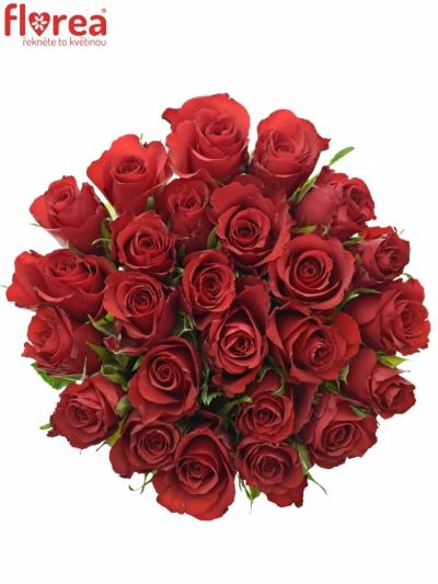 Kytice 25 červených růží RED CALYPSO 50cm