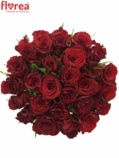 Kytice 25 červených růží RED DRAGON 60cm