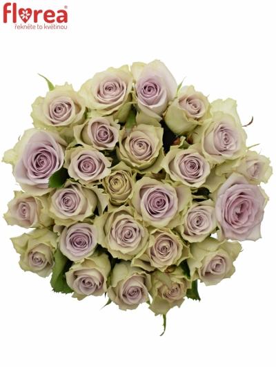 Kytice 25 fialových růží FIFTH AVENUE! 40cm