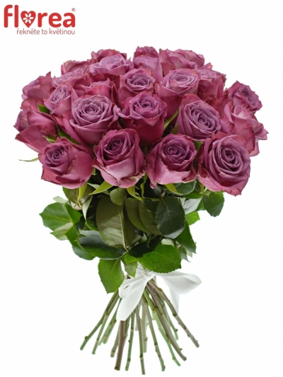 Kytice 25 fialových růží MARITIM
