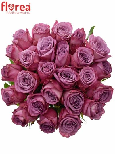 Kytice 25 fialových růží MOODY BLUES 60cm