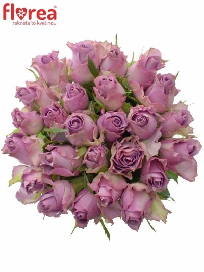 Kytice 25 fialových růží NIGHTINGALE 50cm