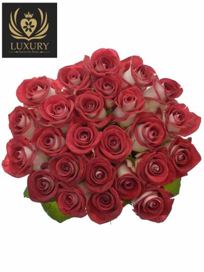 Kytice 25 luxusních růží BLUEZ+ 70cm